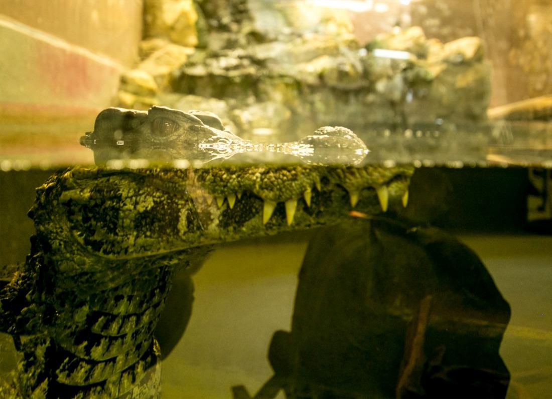 World-of-Crocs-05